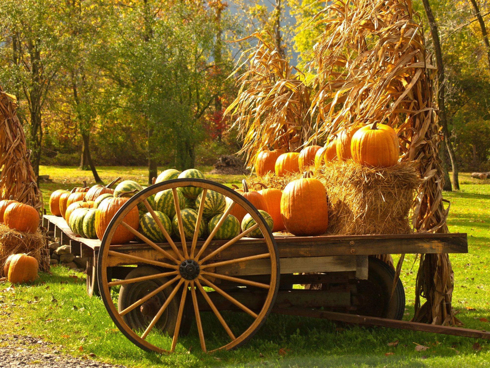 Scarecrow trail at huntsville botanical gardens 2018 - Huntsville botanical gardens hours ...